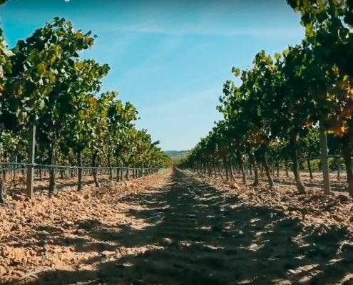 video-corporativo-drobes-bodegas-murviedro